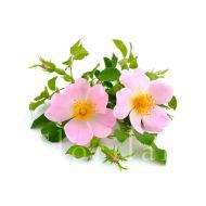 Huile de Rose musquée du Chili